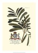 Royal Botanical III