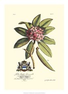Royal Botanical V