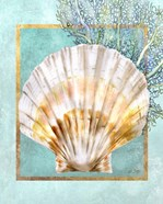 Scallop Shell and Coral