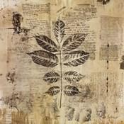Botanical Sketchbook II