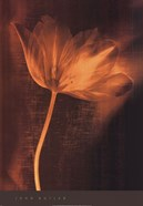 Bronze Tulip II