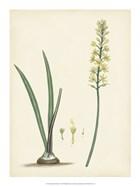 Splendors of Botany VI