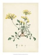 Splendors of Botany VIII