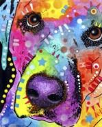 Closeup Labrador