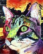 Curiosity Cat