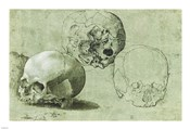 Study of Three Skulls