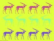 Safari XIII