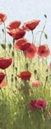 Mountain Poppies I