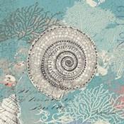 Shells on Aqua