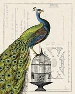 Peacock Birdcage I