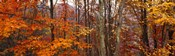 Autumn trees in Great Smoky Mountains National Park, North Carolina, USA