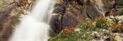Spalding Falls Grand Teton National Park WY