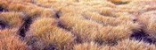 Dry grass in a national park, South Fork Cascade Canyon, Grand Teton National Park, Wyoming, USA
