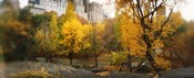 Autumn trees in a park, Central Park, Manhattan, New York City, New York State, USA