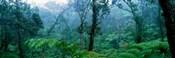 Trees in a rainforest, Hawaii Volcanoes National Park, Big Island, Hawaii, USA