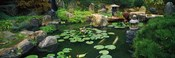 Japanese Garden at University of California