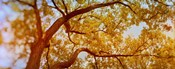 Low angle view of a tree in autumn