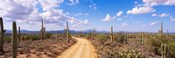 Road, Saguaro National Park, Arizona, USA