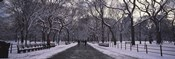 Bare trees in a park, Central Park, New York City, New York State, USA