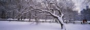 Trees covered with snow in a park, Central Park, New York City, New York state, USA