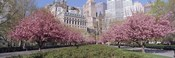 Cherry Trees, Battery Park, NYC, New York City, New York State, USA