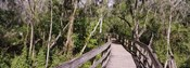 Boardwalk passing through a forest, Lettuce Lake Park, Tampa, Hillsborough County, Florida, USA