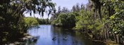 River passing through a forest, Hillsborough River, Lettuce Lake Park, Tampa, Hillsborough County, Florida, USA