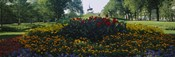 Flowers in a park, Grant Park, Chicago, Cook County, Illinois, USA