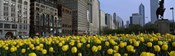 Tulip flowers in a park with buildings in the background, Grant Park, South Michigan Avenue, Chicago, Cook County, Illinois, USA