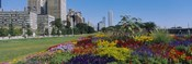 Flowers in a garden, Welcome Garden, Grant Park, Michigan Avenue, Roosevelt Road, Chicago, Cook County, Illinois, USA