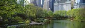 Pond in a park, Central Park South, Central Park, Manhattan, New York City, New York State, USA