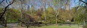 Trees in a park, Central Park West, Central Park, Manhattan, New York City, New York State, USA