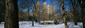 Bare trees with buildings in the background, Central Park, Manhattan, New York City, New York State, USA