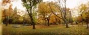 Shedding trees, Central Park, Manhattan, New York City, New York State, USA