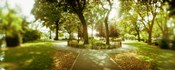Trees in a park, McCarren Park, Greenpoint, Brooklyn, New York City, New York State, USA