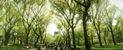 Central Park in the spring time, New York City