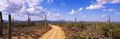 Road, Saguaro National Park, Arizona, USA