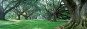 USA, Louisiana, New Orleans, Oak Alley Plantation, plantation home through alley of oak trees