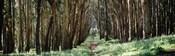 Woman walking on a path in a park, The Presidio, San Francisco, California, USA