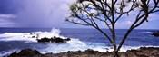 Tree on the coast, Honolulu Nui Bay, Nahiku, Maui, Hawaii, USA