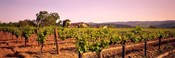 Sattui Winery, Napa Valley, California, USA