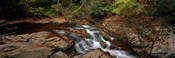 White Water The Great Smoky Mountains TN USA