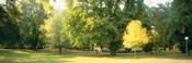 Trees in a park, Wiesbaden, Rhine River, Germany