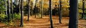 Chestnut Ridge Park Orchard Park NY USA