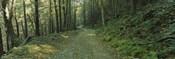 Trees In A National Park, Shenandoah National Park, Virginia, USA
