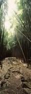 Stone path through a Bamboo forest, Oheo Gulch, Seven Sacred Pools, Hana, Maui, Hawaii, USA
