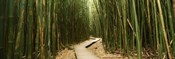 Wooden path surrounded by bamboo, Oheo Gulch, Seven Sacred Pools, Hana, Maui, Hawaii, USA