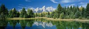 Reflection of trees in water with mountains, Schwabachers Landing, Grand Teton, Grand Teton National Park, Wyoming, USA