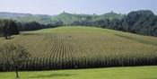 Switzerland, Canton Zug, Panoramic view of Cornfields