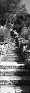 Low angle view of steps in a garden, Neptune's Steps, Tresco Abbey Garden, Tresco, Isles Of Scilly, England
